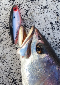 trout with bait