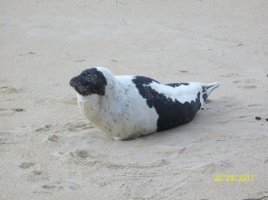 seal[1]