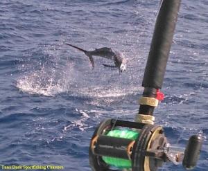 tuna duck sportfishing