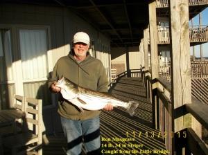 34 inches 14 lb