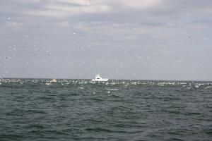 boat  birds