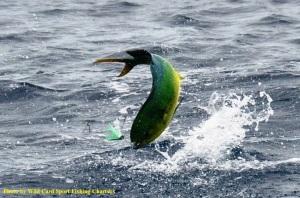 wild card Sportfishing charters.