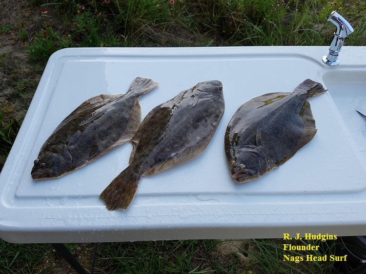 R j hudgins tw 39 s bait and tackle for Tw s fishing report