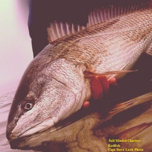 red-drum