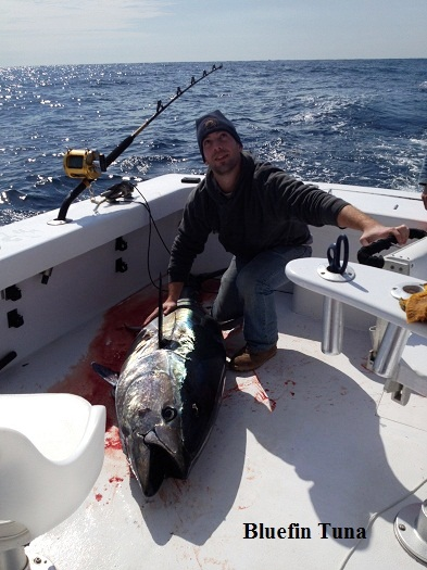 Bluefin tuna tw 39 s bait and tackle for Tw s fishing report