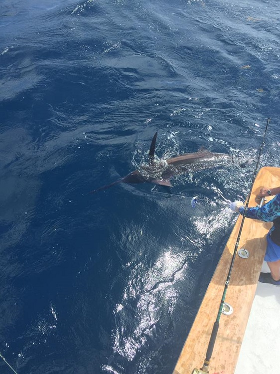 Blue marlin tw 39 s bait and tackle for Tw s fishing report