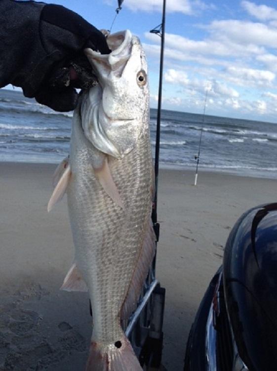 Tws bait and tackle sunday 1 21 18 inshorefishing for Tws bait and tackle fishing report